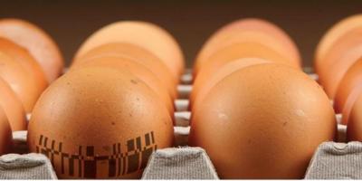 鸡蛋壳的表面,居然可以刻二维码?